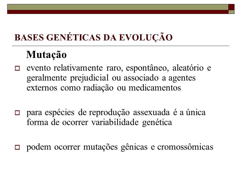 BASES GENÉTICAS DA EVOLUÇÃO Mutação evento relativamente raro, espontâneo, aleatório e geralmente prejudicial ou associado a agentes externos como radiação ou medicamentos para espécies de reprodução assexuada é a única forma de ocorrer variabilidade genética podem ocorrer mutações gênicas e cromossômicas