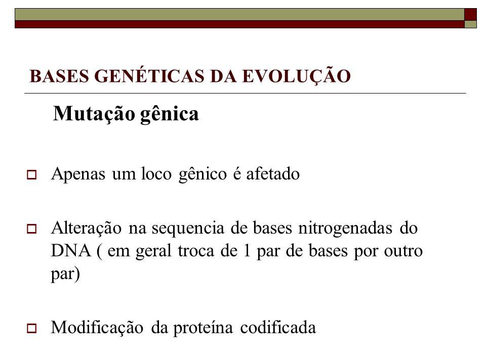 BASES GENÉTICAS DA EVOLUÇÃO Mutação gênica Apenas um loco gênico é afetado Alteração na sequencia de bases nitrogenadas do DNA ( em geral troca de 1 par de bases por outro par) Modificação da proteína codificada