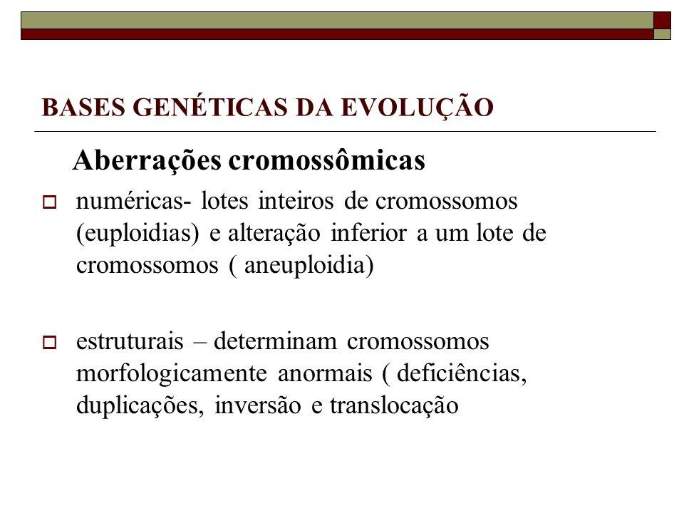 BASES GENÉTICAS DA EVOLUÇÃO Aberrações cromossômicas numéricas- lotes inteiros de cromossomos (euploidias) e alteração inferior a um lote de cromossomos ( aneuploidia) estruturais – determinam cromossomos morfologicamente anormais ( deficiências, duplicações, inversão e translocação