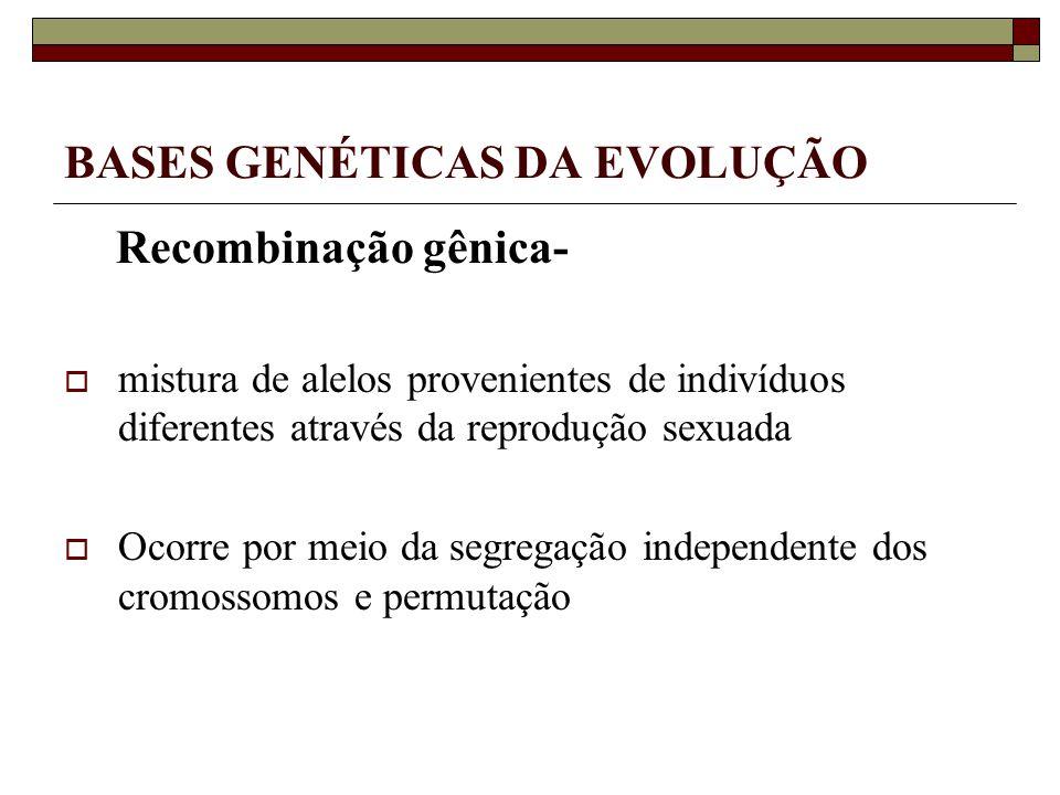 BASES GENÉTICAS DA EVOLUÇÃO Recombinação gênica- mistura de alelos provenientes de indivíduos diferentes através da reprodução sexuada Ocorre por meio da segregação independente dos cromossomos e permutação