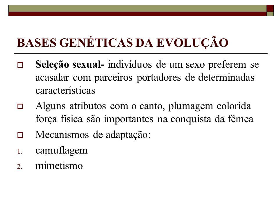 BASES GENÉTICAS DA EVOLUÇÃO Seleção sexual- indivíduos de um sexo preferem se acasalar com parceiros portadores de determinadas características Alguns atributos com o canto, plumagem colorida força física são importantes na conquista da fêmea Mecanismos de adaptação: 1.