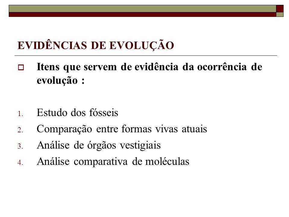 EVIDÊNCIAS DE EVOLUÇÃO Itens que servem de evidência da ocorrência de evolução : 1.