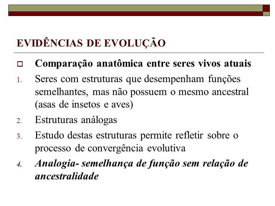 EVIDÊNCIAS DE EVOLUÇÃO Comparação anatômica entre seres vivos atuais 1.
