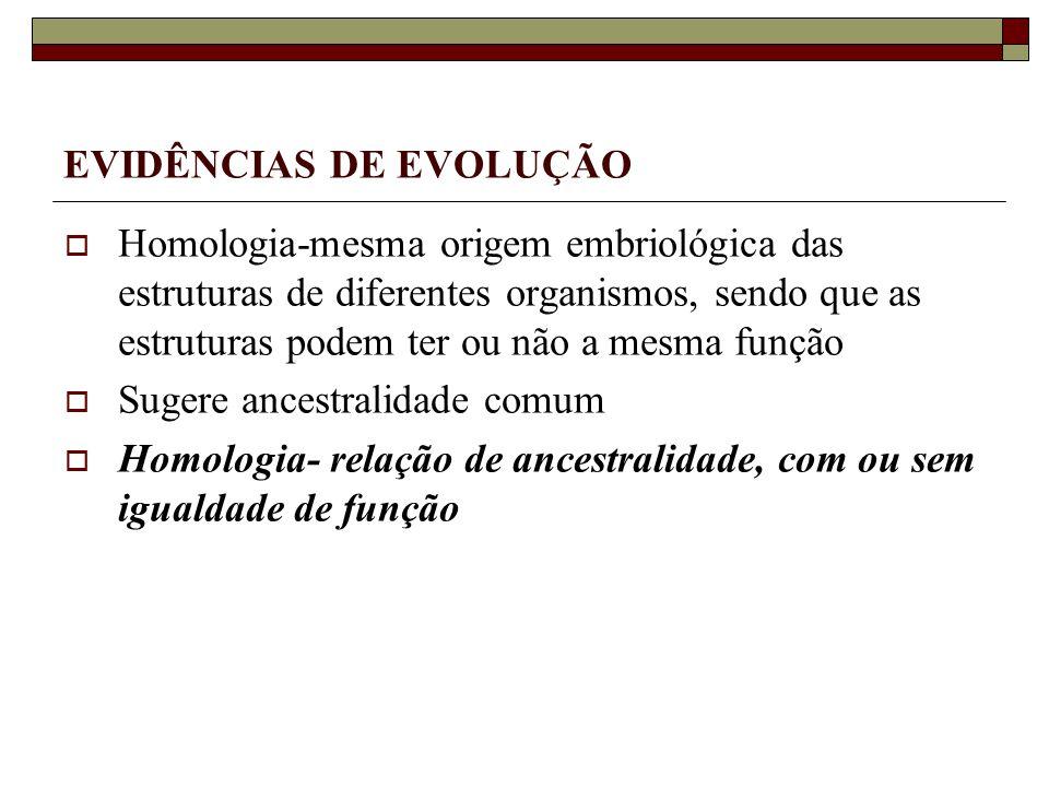EVIDÊNCIAS DE EVOLUÇÃO Homologia-mesma origem embriológica das estruturas de diferentes organismos, sendo que as estruturas podem ter ou não a mesma função Sugere ancestralidade comum Homologia- relação de ancestralidade, com ou sem igualdade de função