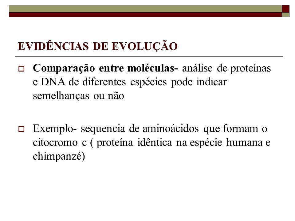 EVIDÊNCIAS DE EVOLUÇÃO Comparação entre moléculas- análise de proteínas e DNA de diferentes espécies pode indicar semelhanças ou não Exemplo- sequencia de aminoácidos que formam o citocromo c ( proteína idêntica na espécie humana e chimpanzé)