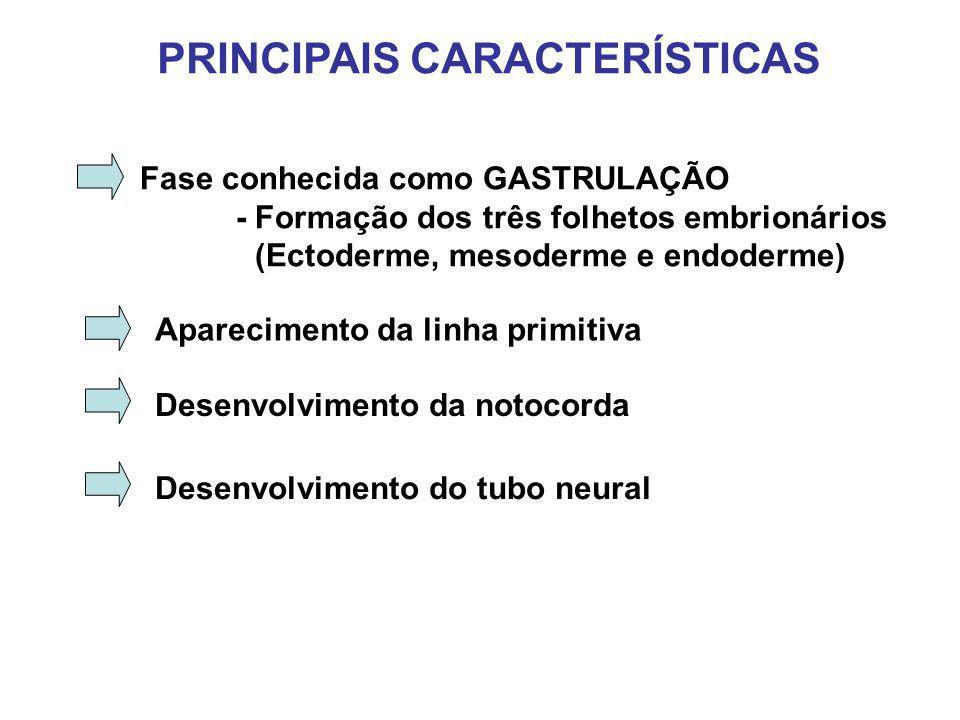 MESODERMA E FORMAÇÃO DOS SOMITOS Fenda neural Ectoderma Mesoderma Paraxial Mesoderma Intermediário Mesoderma lateral Endoderma Notocorda SOMITOS