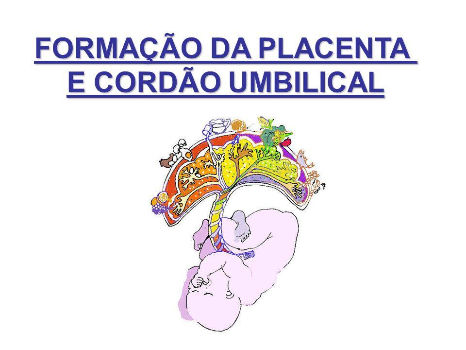 FORMAÇÃO DA PLACENTA E CORDÃO UMBILICAL