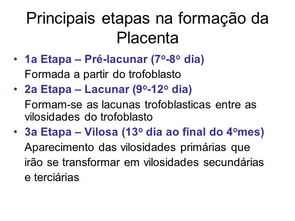 Principais etapas na formação da Placenta 1a Etapa – Pré-lacunar (7 o -8 o dia) Formada a partir do trofoblasto 2a Etapa – Lacunar (9 o -12 o dia) For