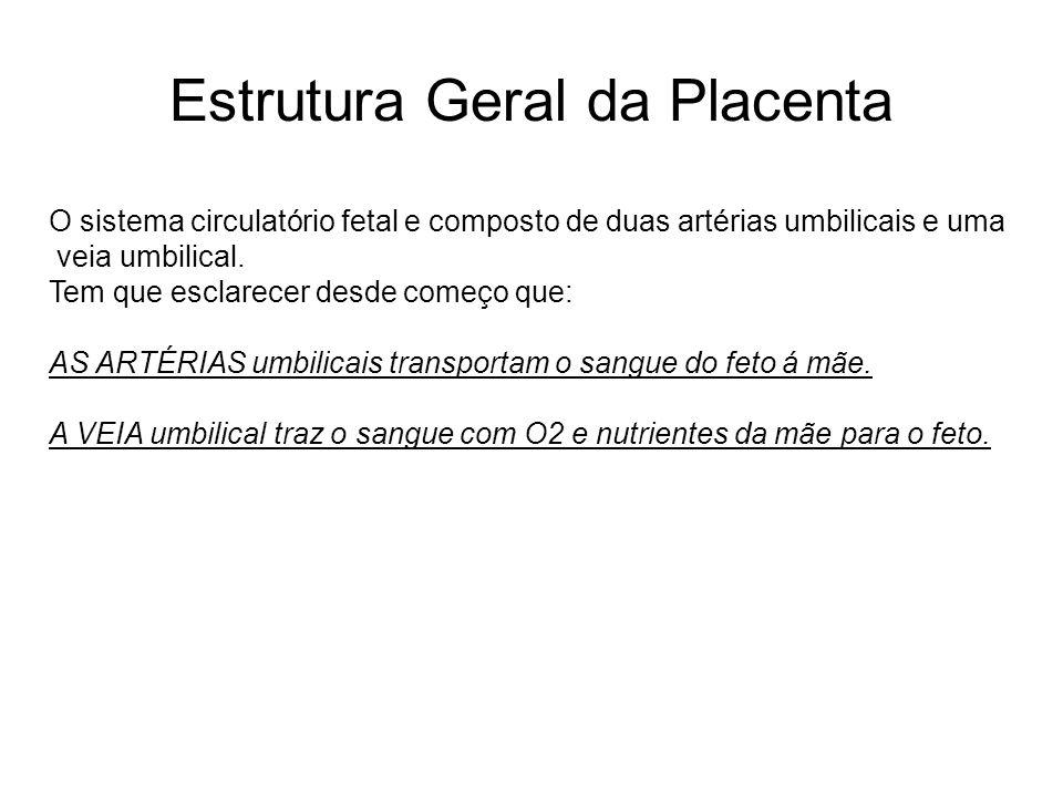 Estrutura Geral da Placenta O sistema circulatório fetal e composto de duas artérias umbilicais e uma veia umbilical. Tem que esclarecer desde começo