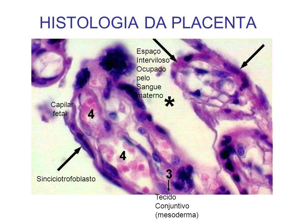 HISTOLOGIA DA PLACENTA Sinciciotrofoblasto Capilar fetal Espaço Interviloso Ocupado pelo Sangue materno Tecido Conjuntivo (mesoderma)