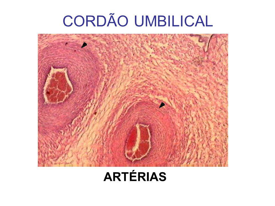 CORDÃO UMBILICAL ARTÉRIAS