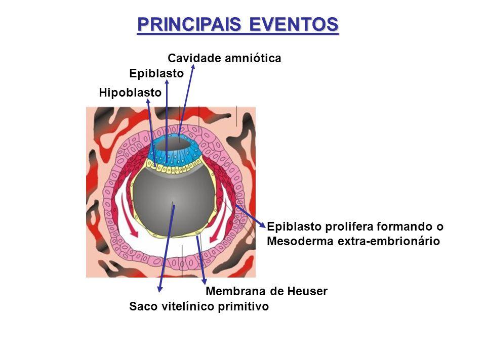 PRINCIPAIS EVENTOS Cavidade amniótica Epiblasto Hipoblasto Saco vitelínico primitivo Membrana de Heuser Epiblasto prolifera formando o Mesoderma extra