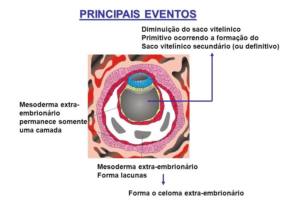 PRINCIPAIS EVENTOS Mesoderma extra-embrionário Forma lacunas Mesoderma extra- embrionário permanece somente uma camada Forma o celoma extra-embrionári