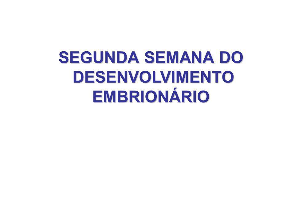 IMPLANTAÇÃO DO EMBRIÃO NO ÚTERO MATERNO (1)Fase de Adesão do embrião ao endométrio Mediada por hormônios: estrogênio progesterona Outras moléculas regulatórias: interleucinas fatores de crescimento Integrinas: presentes no endométrio/embrião Implantação ocorre no polo animal do embrião