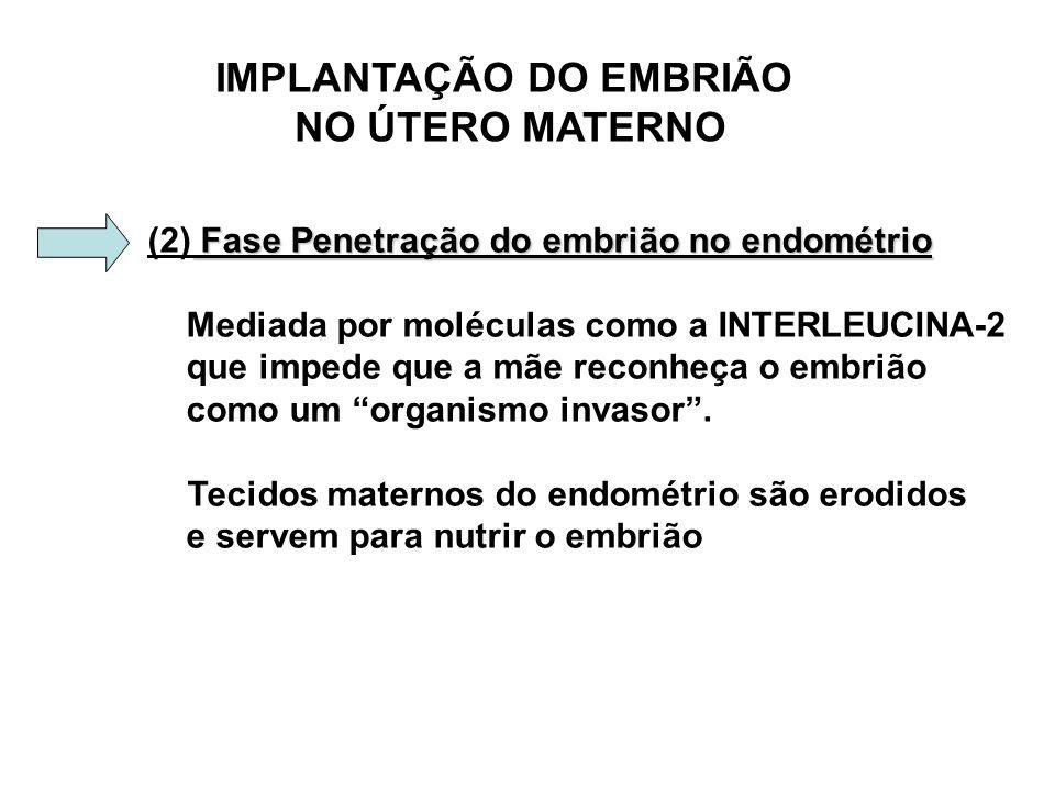 IMPLANTAÇÃO DO EMBRIÃO NO ÚTERO MATERNO Fase Penetração do embrião no endométrio (2) Fase Penetração do embrião no endométrio Mediada por moléculas como a INTERLEUCINA-2 que impede que a mãe reconheça o embrião como um organismo invasor.