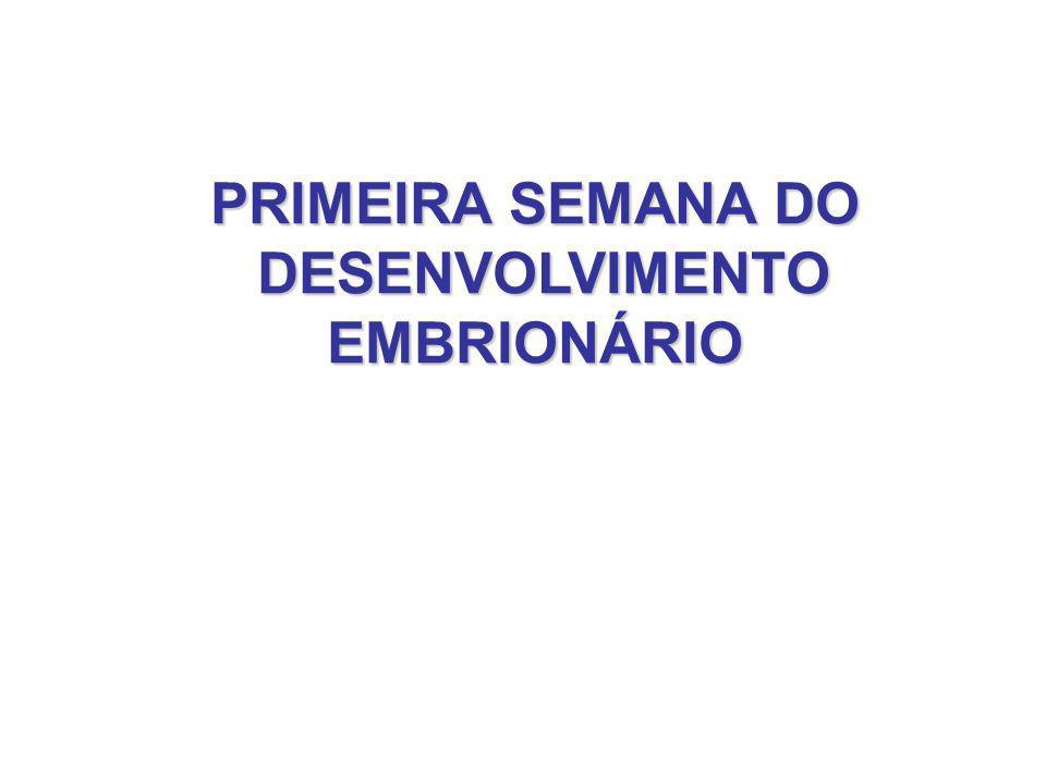 PRIMEIRA SEMANA DO DESENVOLVIMENTO DESENVOLVIMENTOEMBRIONÁRIO