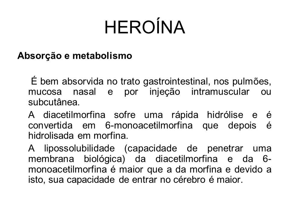 HEROÍNA Absorção e metabolismo É bem absorvida no trato gastrointestinal, nos pulmões, mucosa nasal e por injeção intramuscular ou subcutânea.