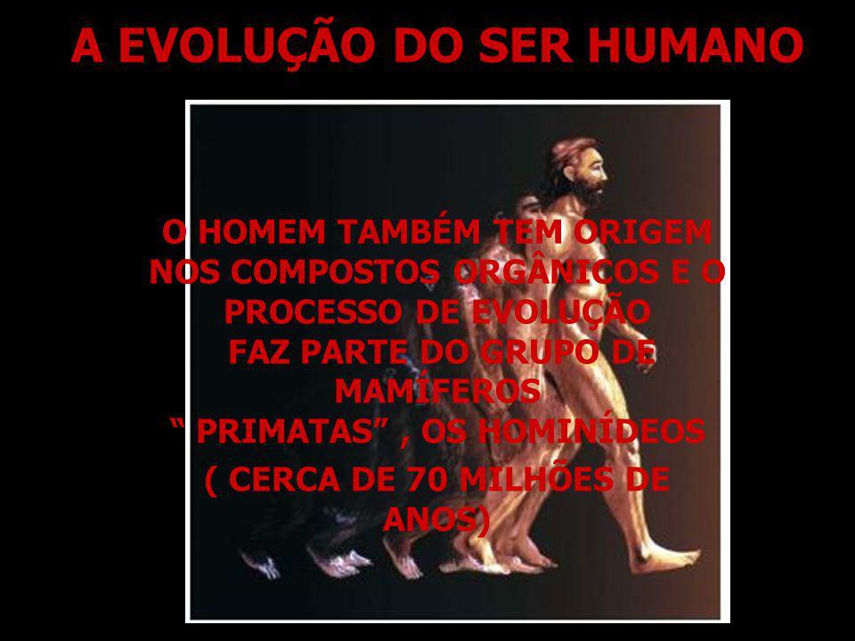 A EVOLUÇÃO DO SER HUMANO O HOMEM TAMBÉM TEM ORIGEM NOS COMPOSTOS ORGÂNICOS E O PROCESSO DE EVOLUÇÃO FAZ PARTE DO GRUPO DE MAMÍFEROS PRIMATAS, OS HOMIN