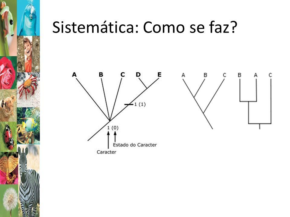 Sistemática: nomenclatura Nomenclatura Biológica: Sistema Binomial: Gênero (por extenso na 1ª x) e epiteto específico.