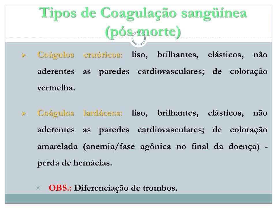 Coágulos cruóricos: Coágulos cruóricos: liso, brilhantes, elásticos, não aderentes as paredes cardiovasculares; de coloração vermelha.