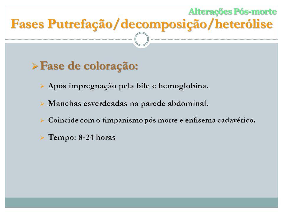 Fase de coloração: Fase de coloração: Após impregnação pela bile e hemoglobina.