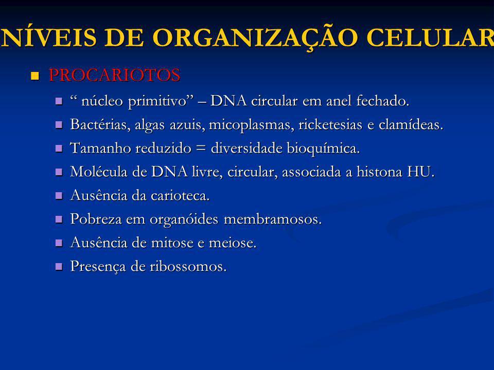 NÍVEIS DE ORGANIZAÇÃO CELULAR PROCARIOTOS PROCARIOTOS núcleo primitivo – DNA circular em anel fechado. núcleo primitivo – DNA circular em anel fechado