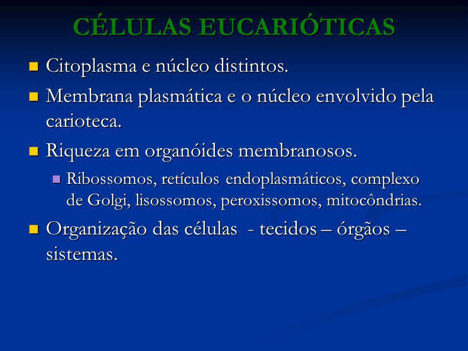CÉLULAS EUCARIÓTICAS Citoplasma e núcleo distintos. Citoplasma e núcleo distintos. Membrana plasmática e o núcleo envolvido pela carioteca. Membrana p