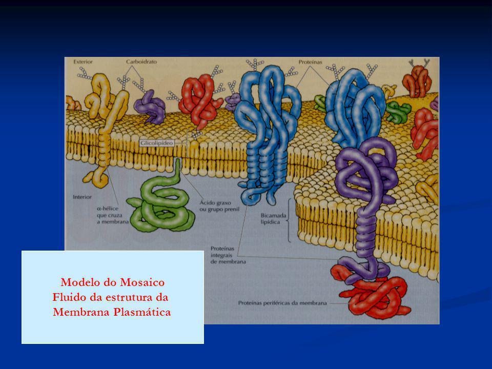 Modelo do Mosaico Fluido da estrutura da Membrana Plasmática