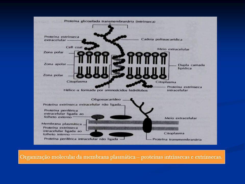 Organização molecular da membrana plasmática – proteínas intrínsecas e extrínsecas.