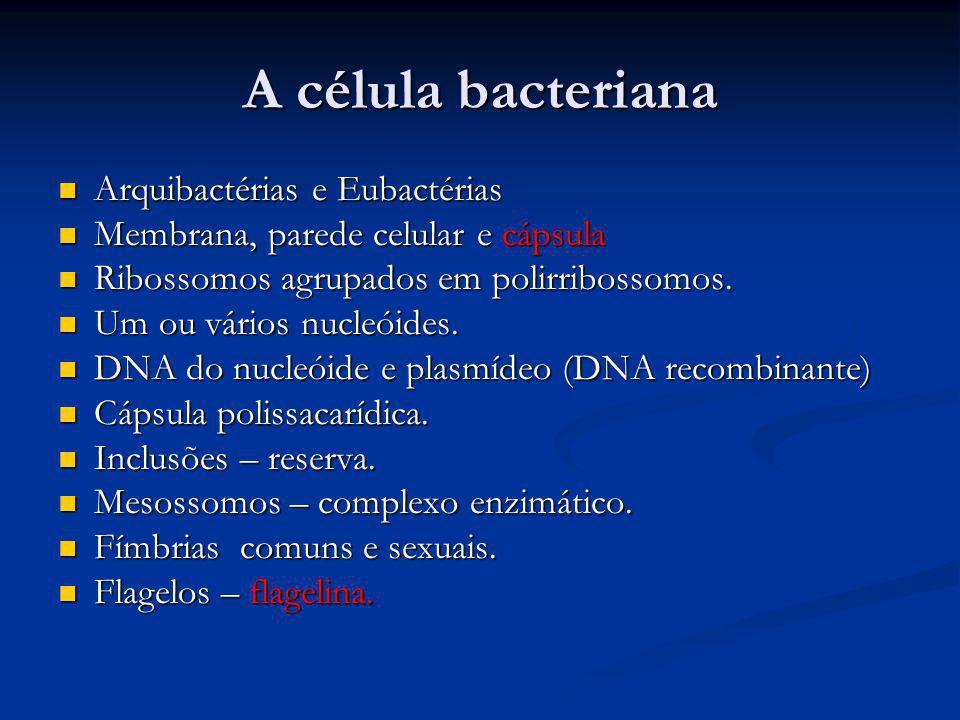 A célula bacteriana Arquibactérias e Eubactérias Arquibactérias e Eubactérias Membrana, parede celular e cápsula Membrana, parede celular e cápsula Ri
