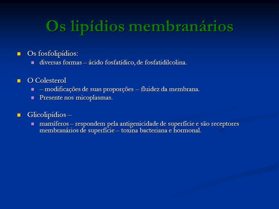 Os lipídios membranários Os fosfolipídios: Os fosfolipídios: diversas formas – ácido fosfatídico, de fosfatidilcolina. diversas formas – ácido fosfatí
