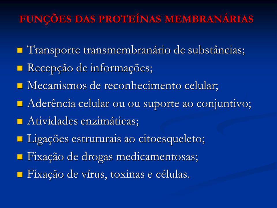 FUNÇÕES DAS PROTEÍNAS MEMBRANÁRIAS Transporte transmembranário de substâncias; Transporte transmembranário de substâncias; Recepção de informações; Re