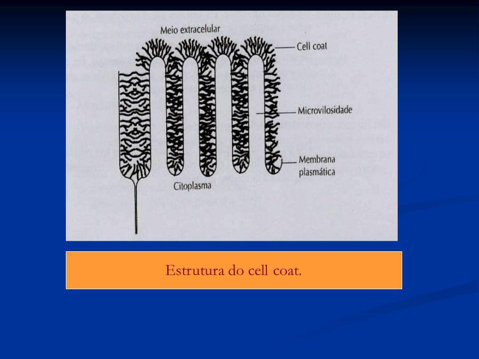 Estrutura do cell coat.