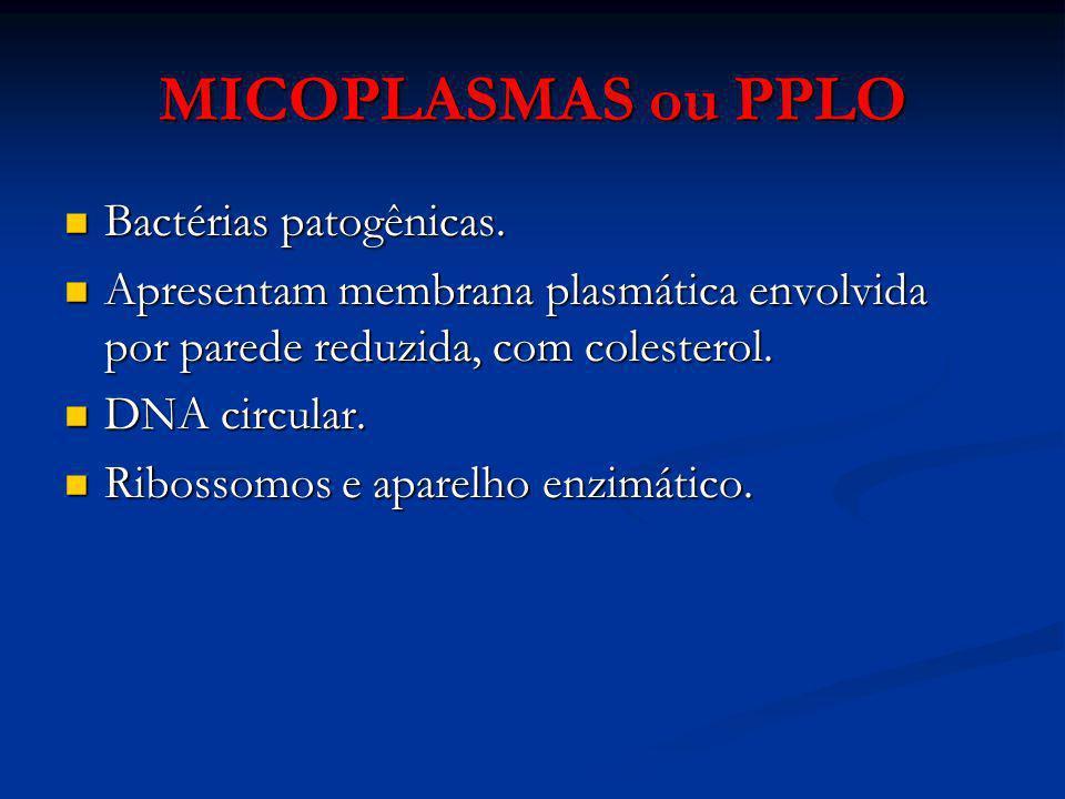 MICOPLASMAS ou PPLO Bactérias patogênicas. Bactérias patogênicas. Apresentam membrana plasmática envolvida por parede reduzida, com colesterol. Aprese