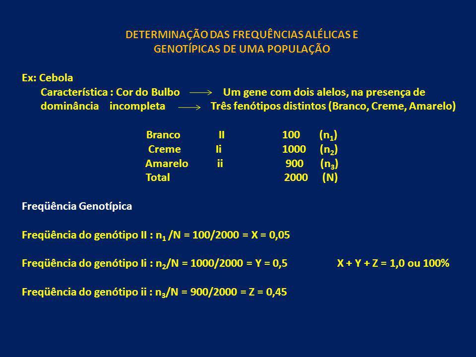 DETERMINAÇÃO DAS FREQUÊNCIAS ALÉLICAS E GENOTÍPICAS DE UMA POPULAÇÃO Ex: Cebola Característica : Cor do Bulbo Um gene com dois alelos, na presença de
