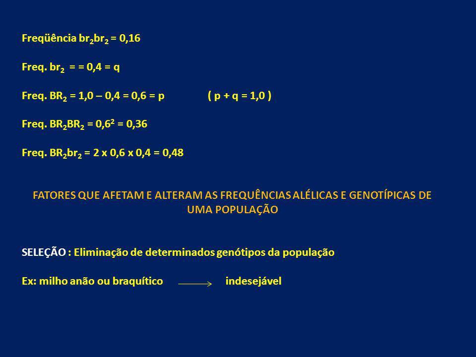 Freqüência br 2 br 2 = 0,16 Freq. br 2 = = 0,4 = q Freq. BR 2 = 1,0 – 0,4 = 0,6 = p ( p + q = 1,0 ) Freq. BR 2 BR 2 = 0,6 2 = 0,36 Freq. BR 2 br 2 = 2