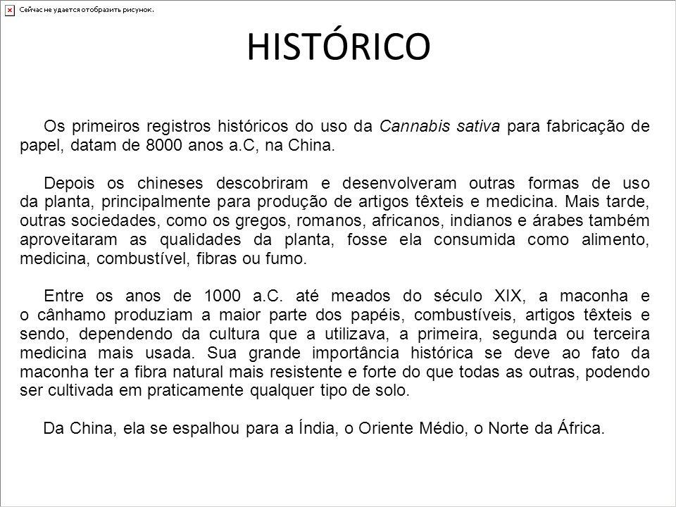 HISTÓRICO Os primeiros registros históricos do uso da Cannabis sativa para fabricação de papel, datam de 8000 anos a.C, na China. Depois os chineses d