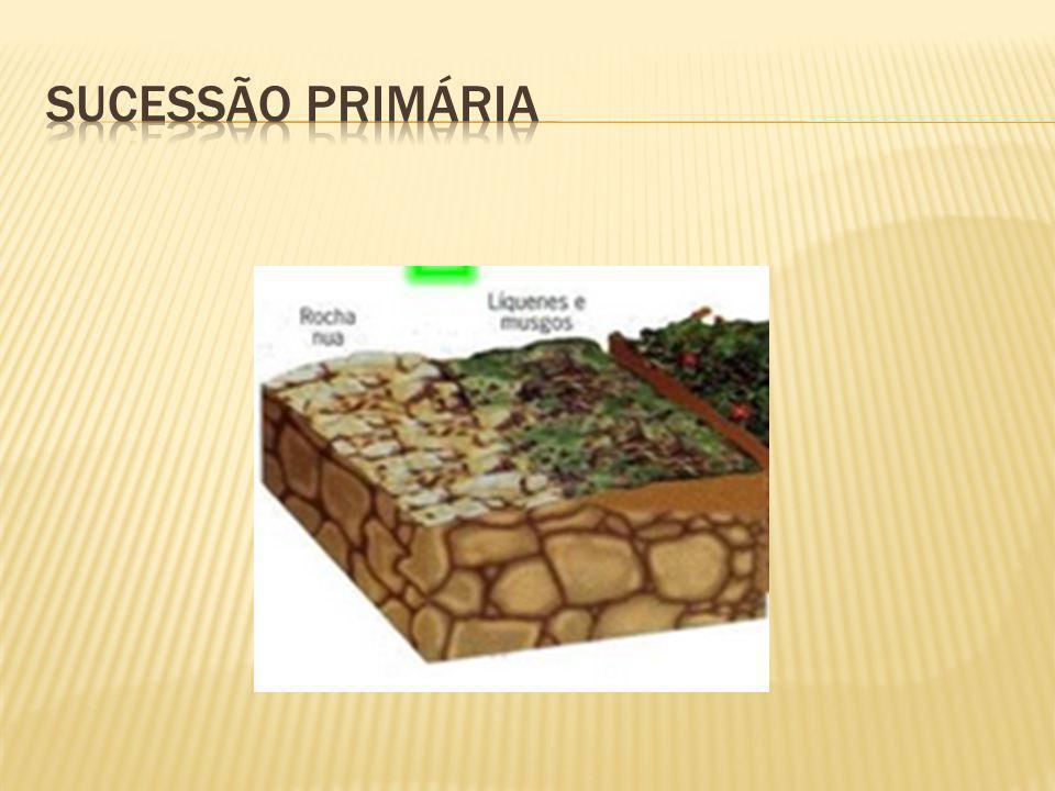 Sucessão primária: em substratos não previamente ocupados por organismos.