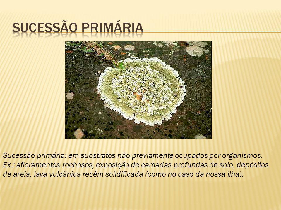 Sucessão primária: em substratos não previamente ocupados por organismos. Ex.: afloramentos rochosos, exposição de camadas profundas de solo, depósito