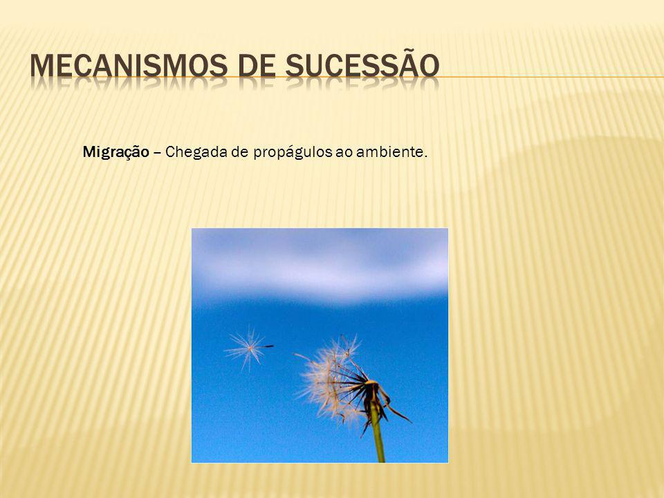 Ecese – Estabelecimento e crescimento das primeiras plantas (pioneiras).