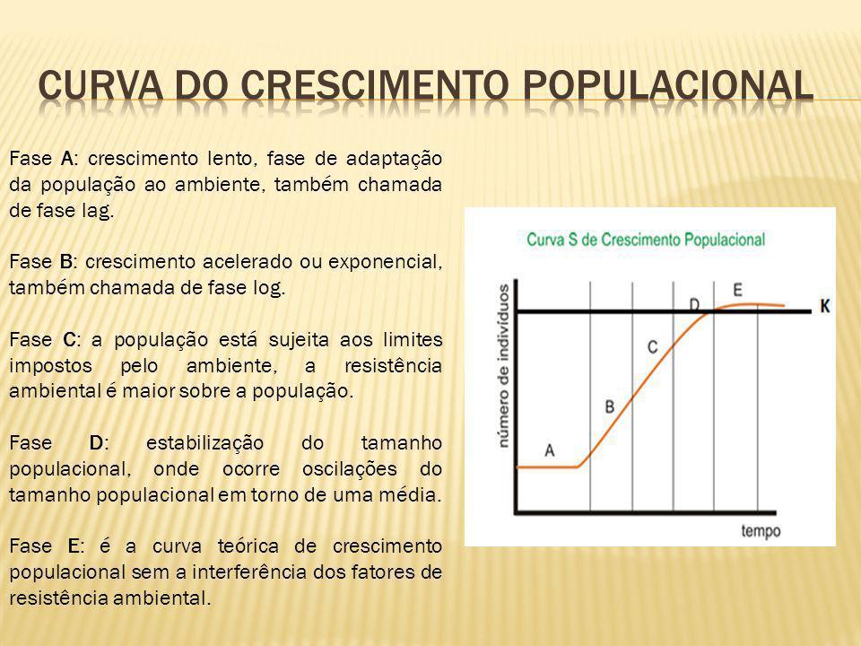 Fase A: crescimento lento, fase de adaptação da população ao ambiente, também chamada de fase lag. Fase B: crescimento acelerado ou exponencial, també