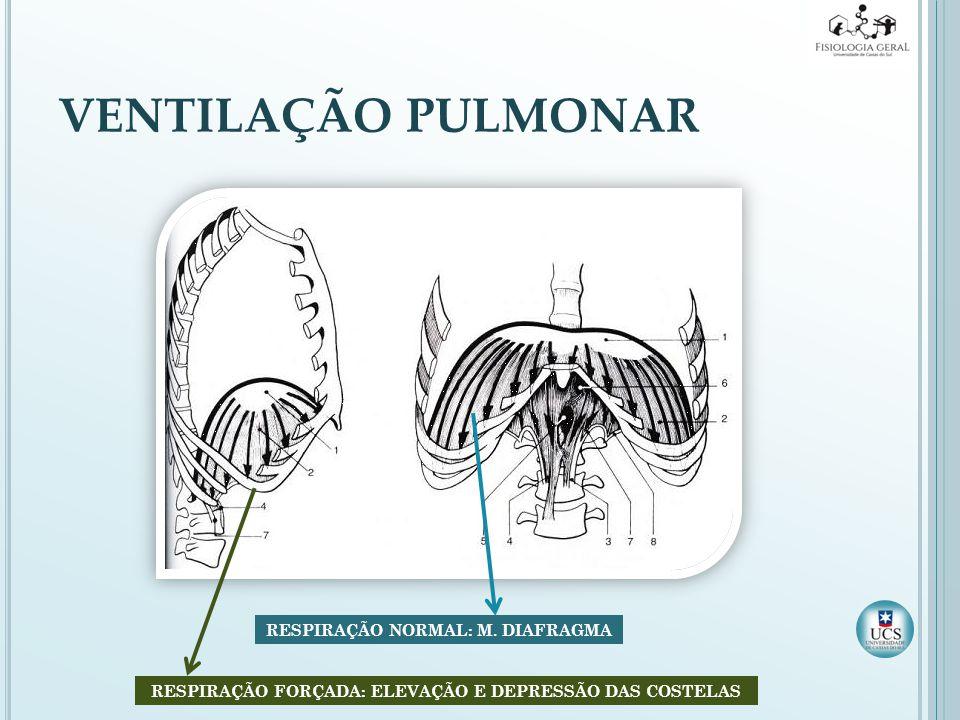 MÚSCULOS DA RESPIRAÇÃO External intercostal muscles Internal intercostal muscles Diaphragm muscle Abdominal muscles Accessory muscles