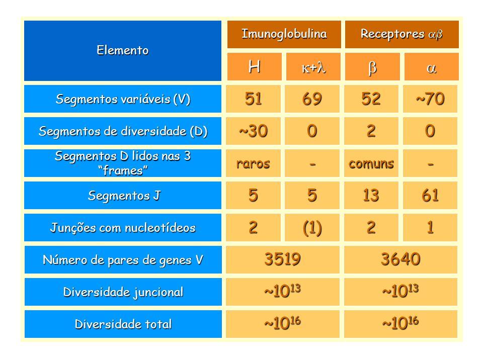 Após a expressão do TCR, os timócitos tornam-se duplo-positivos (CD4 + CD8 + ). Timócitoduplo-positivo (CD4 + 8 + ) Timócitoduplo-negativo (CD4 - 8 -