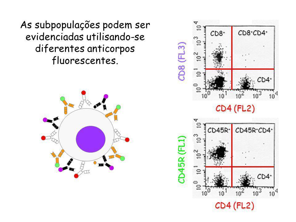 As subpopulações podem ser evidenciadas utilisando-se diferentes anticorpos fluorescentes.
