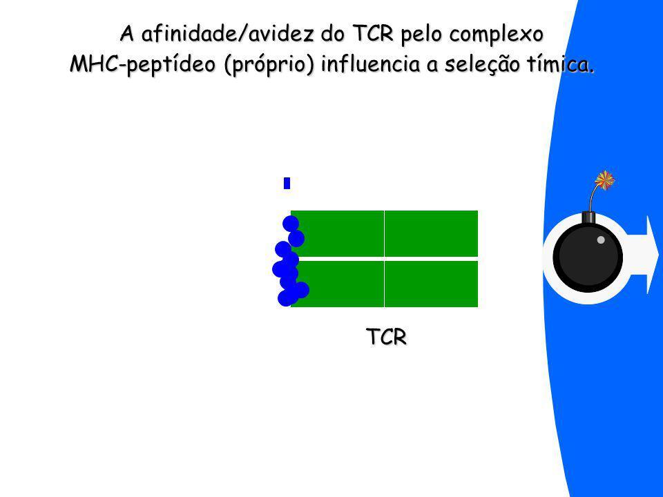TCR A afinidade/avidez do TCR pelo complexo MHC-peptídeo (próprio) influencia a seleção tímica.