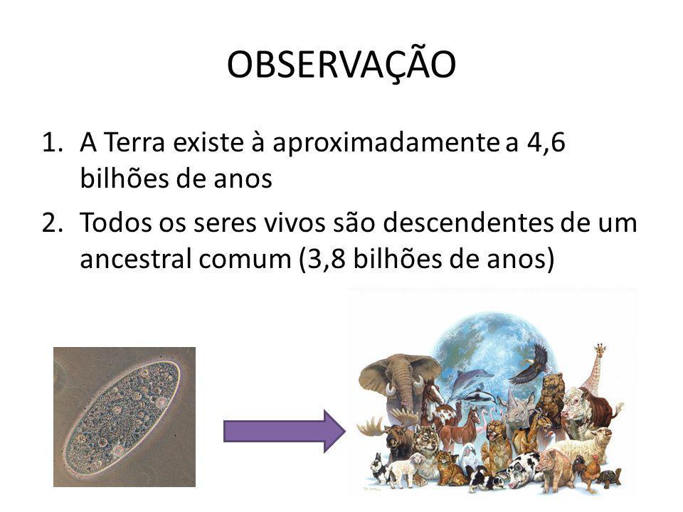 OBSERVAÇÃO 1.A Terra existe à aproximadamente a 4,6 bilhões de anos 2.Todos os seres vivos são descendentes de um ancestral comum (3,8 bilhões de anos)