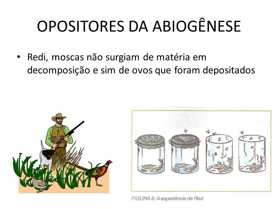OPOSITORES DA ABIOGÊNESE Redi, moscas não surgiam de matéria em decomposição e sim de ovos que foram depositados