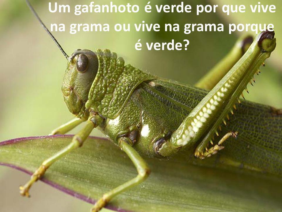 Um gafanhoto é verde por que vive na grama ou vive na grama porque é verde?