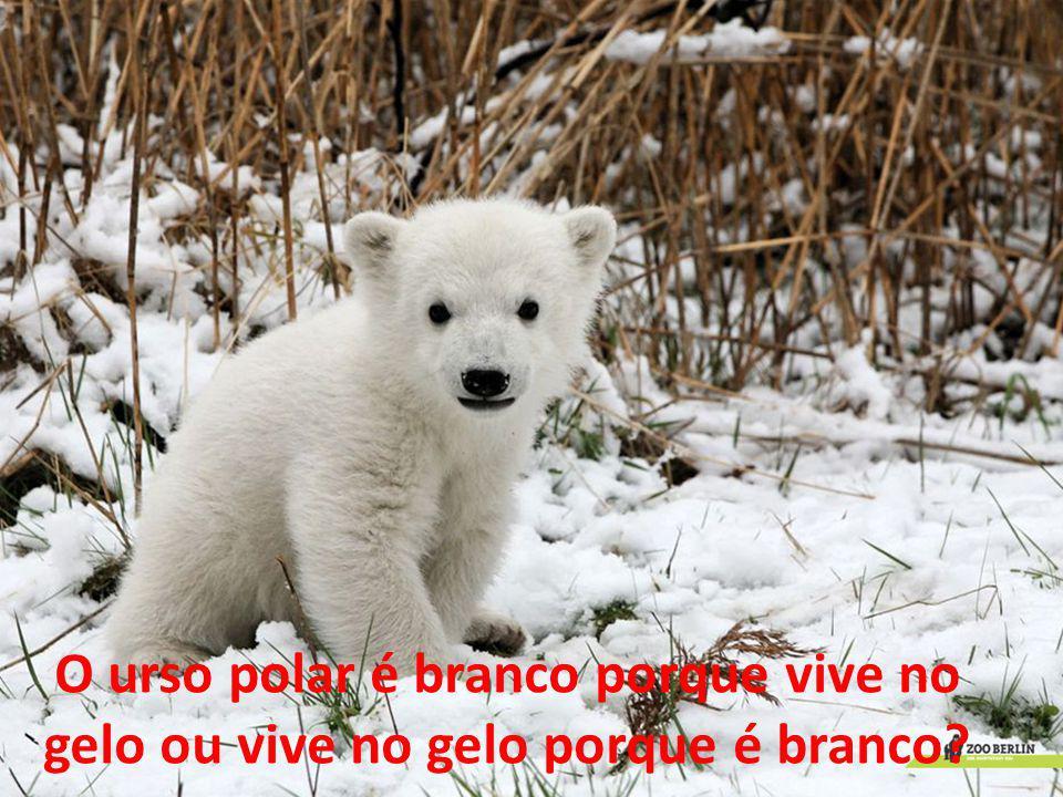 O urso polar é branco porque vive no gelo ou vive no gelo porque é branco?