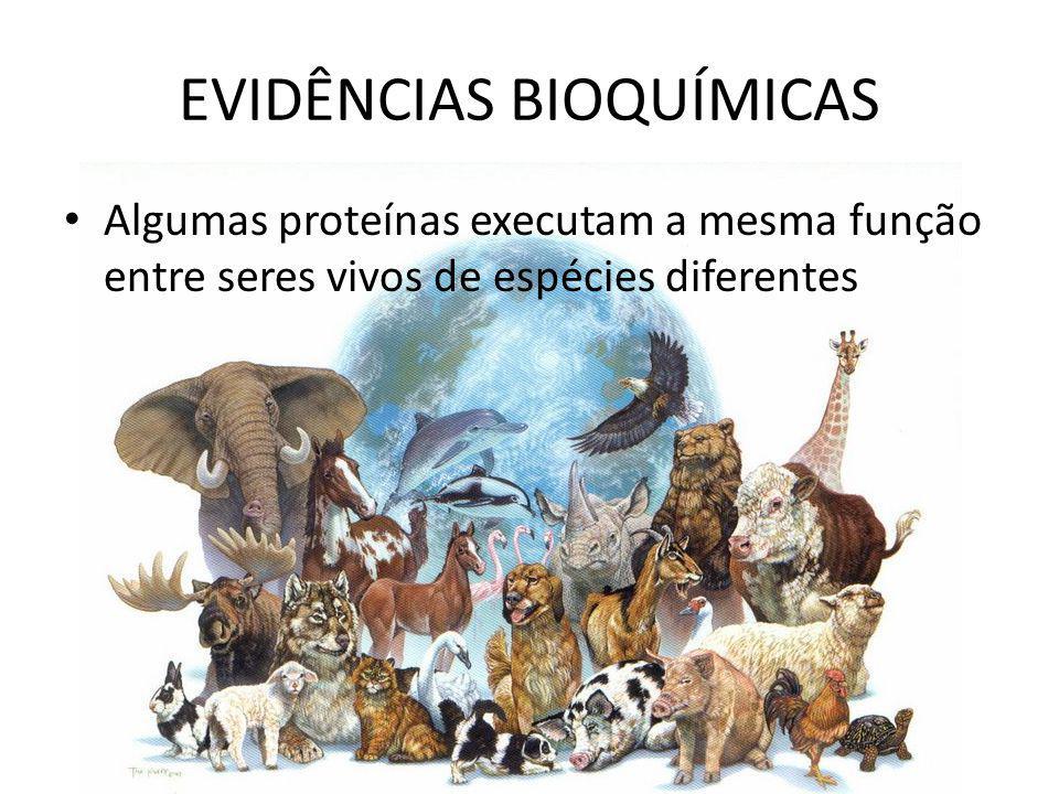 EVIDÊNCIAS BIOQUÍMICAS Algumas proteínas executam a mesma função entre seres vivos de espécies diferentes